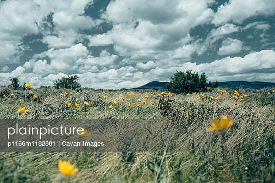 p1166m1182881 von Cavan Images