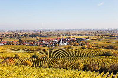 Germany,Rhineland-Palatinate, Pfalz, German Wine Route, wine village Forst and vineyards in autumn colours - p300m2042042 by Gaby Wojciech