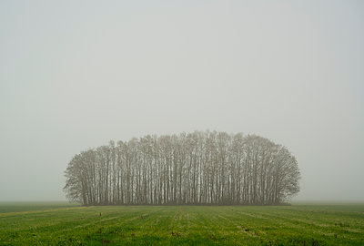 Netherlands, Noord-Brabant, Oosterhout, Bare trees in field on foggy day - p924m2271280 by Mischa Keijser