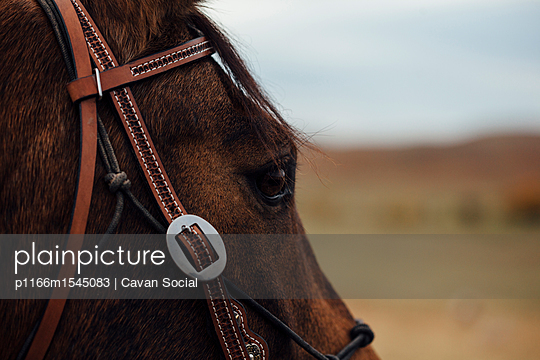 p1166m1545083 von Cavan Social