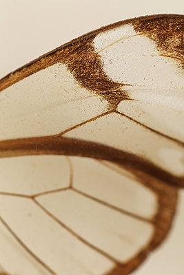 Macro Butterfly - p1054m2278041 by Maria Kazvan