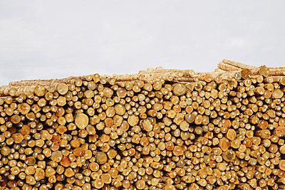 Stacks of freshly cut logs - p1100m876555f by Paul Edmondson