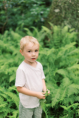 Little boy amidst the fern in the woods. - p1166m2151860 by Cavan Images