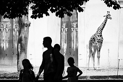 In a zoo - p1245m1043442 by Catherine Minala