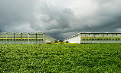 Greenhouses in field under cloudy sky - p429m821813 by Mischa Keijser