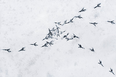 Bird tracks - p1006m891461 by Danel