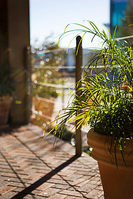 Potted Plant and Brick Patio - p5550991f by LOOK Photography