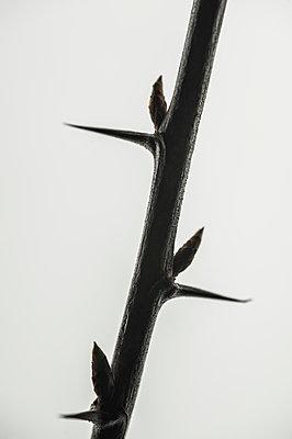Thorns - p971m1128146 by Reilika Landen
