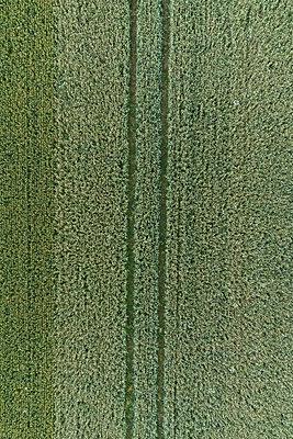 Full frame aerial view of crops growing in field, Stuttgart, Baden-Wuerttemberg, Germany - p301m1406293 by Stephan Zirwes