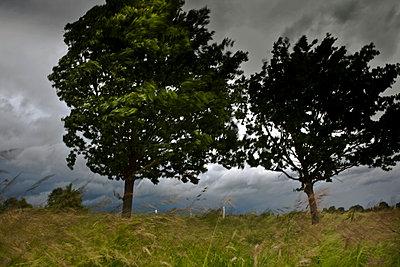 Sturm - p6470085 von Tine Butter