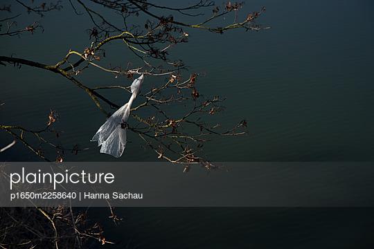 Plastic bag in the wind - p1650m2258640 by Hanna Sachau