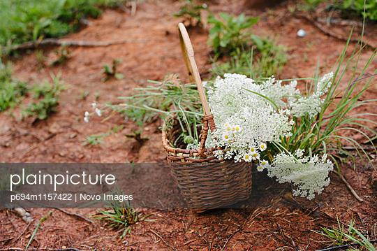 p694m1157422 von Novo Images