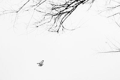 Butterfly kite in the sky - p1513m2043933 by ESTELLE FENECH