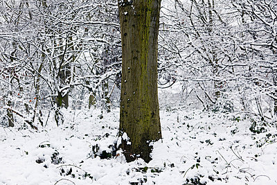 Tree in the snow - p92411937 by Andrea Bakacs