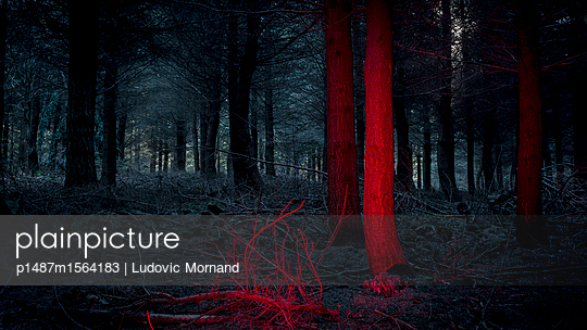 Dark Forest #02 - p1487m1564183 by Ludovic Mornand