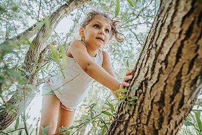 Little girl climbing willow tree - p300m2221572 by Mareen Fischinger