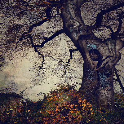 Her Dark Highness - p1633m2208951 by Bernd Webler