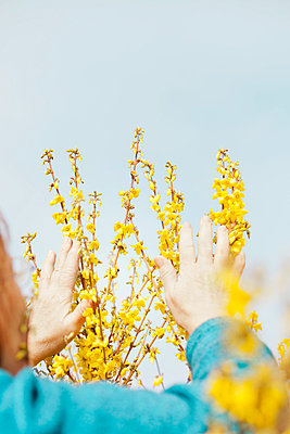 woman touching spring blossoms - p956m658557 by Anna Quinn