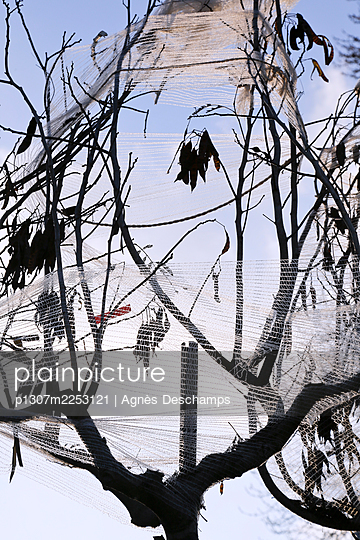 Tree wrapped in plastic - p1307m2253121 by Agnès Deschamps