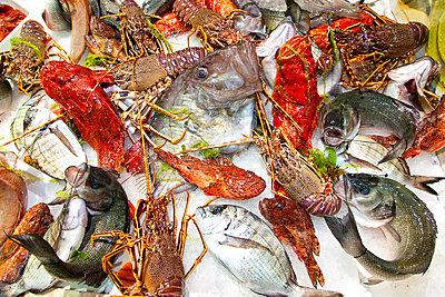 Lobster - p1205m1112183 by Toni Anzenberger & Christina Anzenberger-Fink