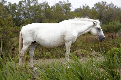 Pferd in der Camargue  - p4150313 von Tanja Luther