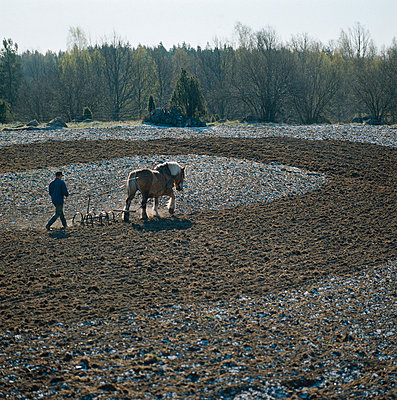 Harrowing with a horse - p4692084 by Peter Gerdehag