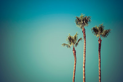 Palm trees in blue sky - p555m1306301 by Dave and Les Jacobs