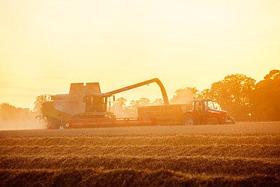 Landwirtschaft - p1057m1072083 von Stephen Shepherd