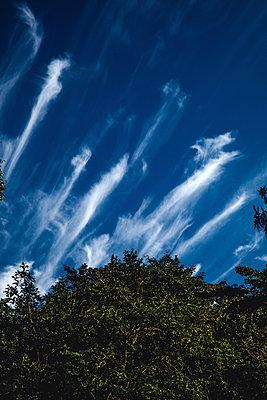 Baumgrün vor blauem Himmel mit Wolkenschlieren - p1180m1020402 von chillagano