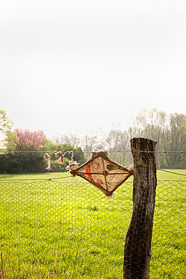 Kite and fence - p902m900361 by Mölleken