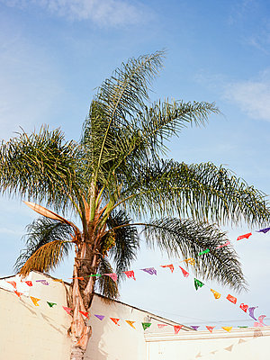 Banners and Palm - p1431m1497133 by Daniel R. Lopez