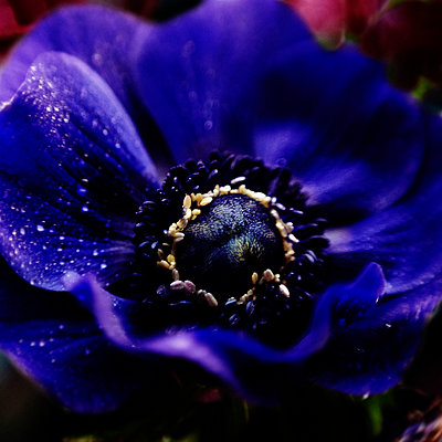 Close up of water droplets on flower - p555m1305193 by Vladimir Serov