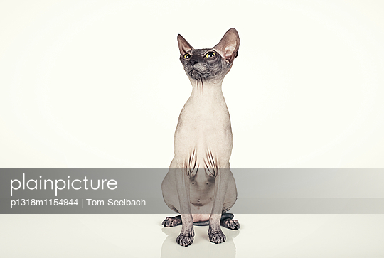 Nude Cat - p1318m1154944 von Tom Seelbach