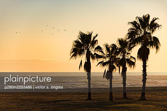 Spanien, Palmen am Strand - p280m2253486 von victor s. brigola