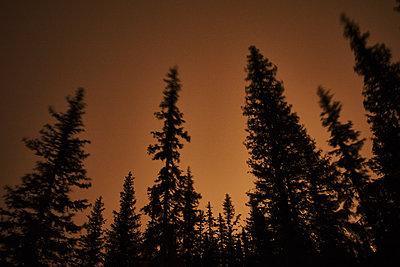 Lappländischer Wald im späten Sonnenlicht - p1573m2163807 von Christian Bendel