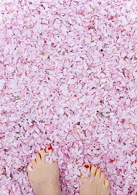 Sensual springtime - p454m1143678 by Lubitz + Dorner