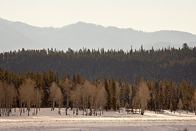 Stacked forest layers with snow, Grand Teton National Park, Wyoming, United States of America, North America - p871m1073410f by James Hager