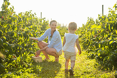 Mother and little daughter picking raspberries in summer - p300m2079130 by Daniel Ingold
