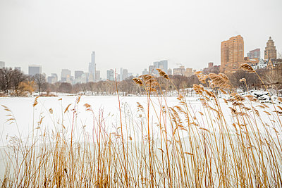 Views of Central Park in New York. - p343m1088988 by Mat Rick
