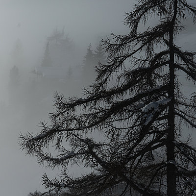 Switzerland, Tree in fog - p1624m2222646 by Gabriela Torres Ruiz