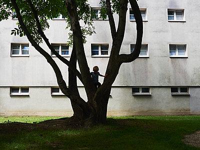Junge klettert auf den Baum - p358m1516349 von Frank Muckenheim