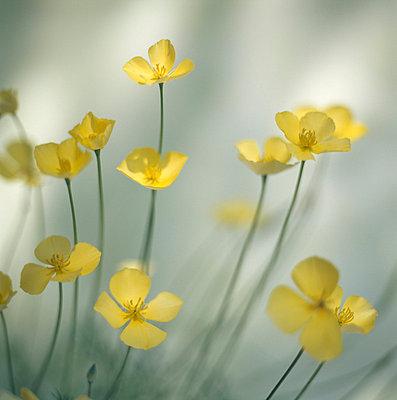 Yellow flowers - p4950190 by Jeanene Scott