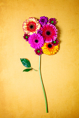 Arranged flowers - p1248m2152484 by miguel sobreira
