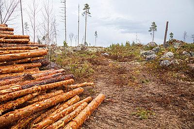 p312m1011762f von Lars-Olof Johansson