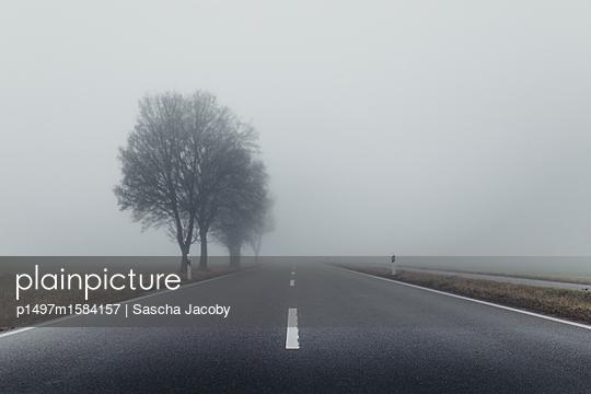 Straße im Nebel mit Bäumen im Herbst - p1497m1584157 von Sascha Jacoby