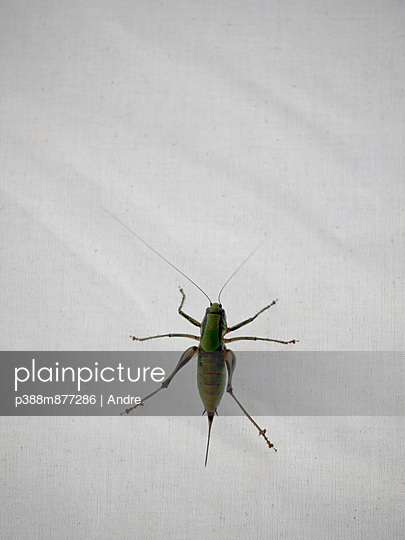 Insect on white fabric