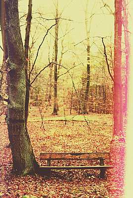 Bench in a forest - p1089m856006 by Frank Swertz