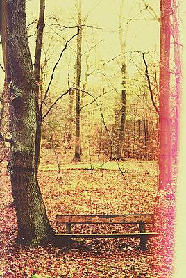 Bank im Wald - p1089m856006 von Frank Swertz