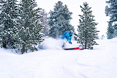 Skier turning between trees and spraying powder - p1166m2159499 by Cavan Images