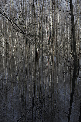 Birkenwald - p212m901002 von Edith M. Balk